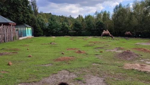Leśne Zacisze i Bałtów